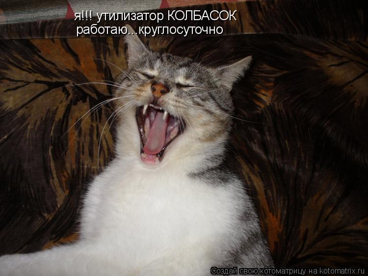 Котоматрица: я!!! утилизатор КОЛБАСОК работаю...круглосуточно