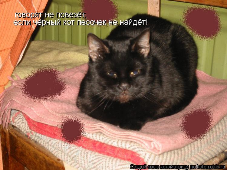 Котоматрица: говорят не повезёт, если чёрный кот песочек не найдёт!