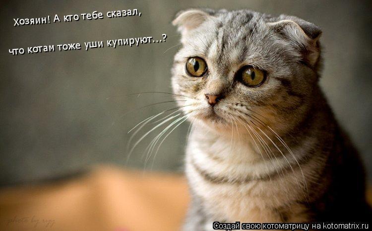 Котоматрица: Хозяин! А кто тебе сказал, что котам тоже уши купируют...?