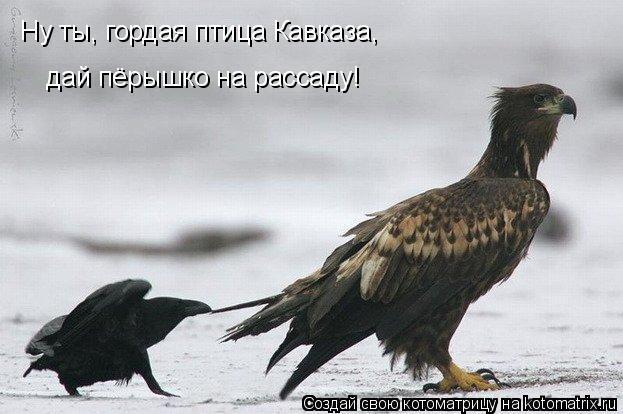 Котоматрица: Ну ты, гордая птица Кавказа, дай пёрышко на рассаду!