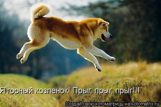 Котоматрица: Я горный козленок! Прыг, прыг, прыг!!!
