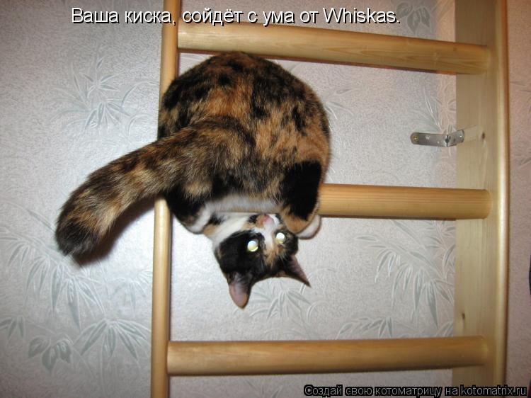 Котоматрица: Ваша киска, сойдёт с ума от Whiskas.