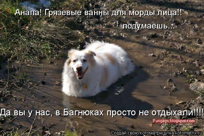 Котоматрица: Анапа! Грязевые ванны для морды лица!! подумаешь... Да вы у нас, в Багнюках просто не отдыхали!!!!