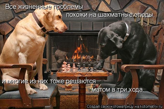 Котоматрица: Все жизненные проблемы похожи на шахматные этюды, и многие из них тоже решаются матом в три хода.