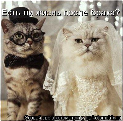 Котоматрица: Есть ли жизнь после брака?