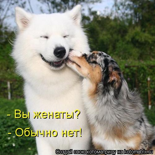 Котоматрица: - Вы женаты? - Обычно нет!