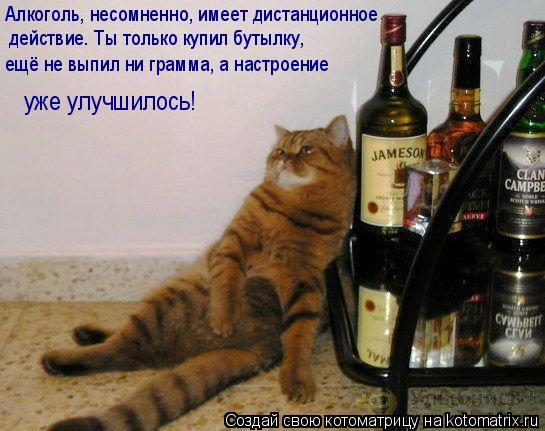 Котоматрица: Алкоголь, несомненно, имеет дистанционное действие. Ты только купил бутылку, ещё не выпил ни грамма, а настроение уже улучшилось!