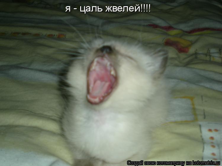 Котоматрица: я - цаль жвелей!!!!