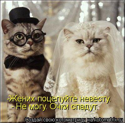 Котоматрица: -Жених поцелуйте невесту. - Не могу. Очки спадут.