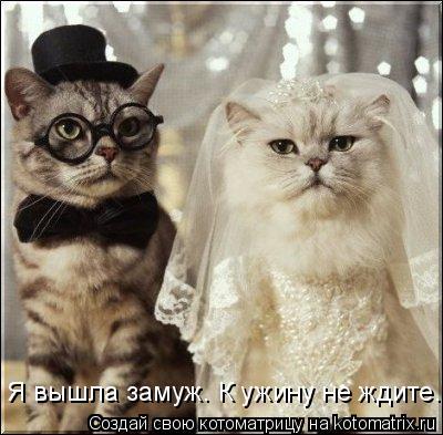 Котоматрица: Я вышла замуж. К ужину не ждите...