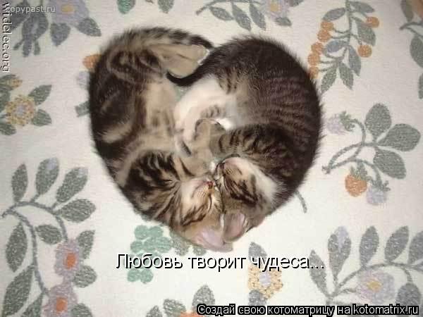 Котоматрица: Любовь творит чудеса...