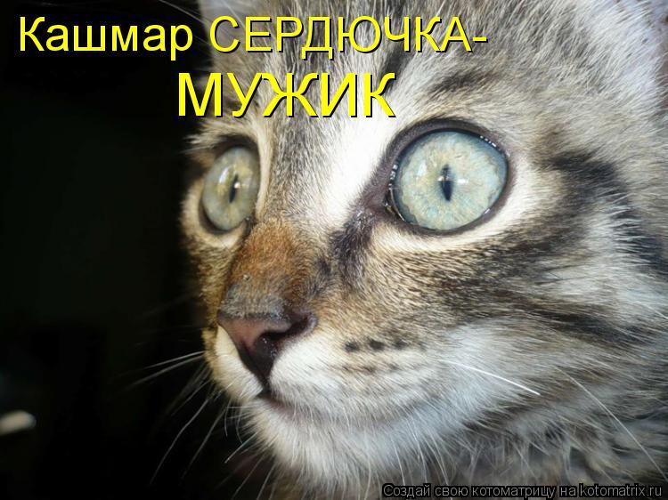 Котоматрица: Кашмар СЕРДЮЧКА- МУЖИК