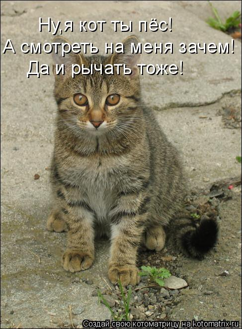 Котоматрица: Ну,я кот ты пёс! А смотреть на меня зачем! Да и рычать тоже!