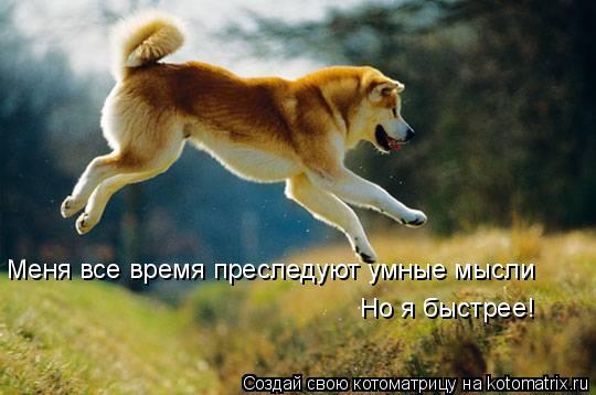 Котоматрица: Меня все время преследуют умные мысли Но я быстрее!