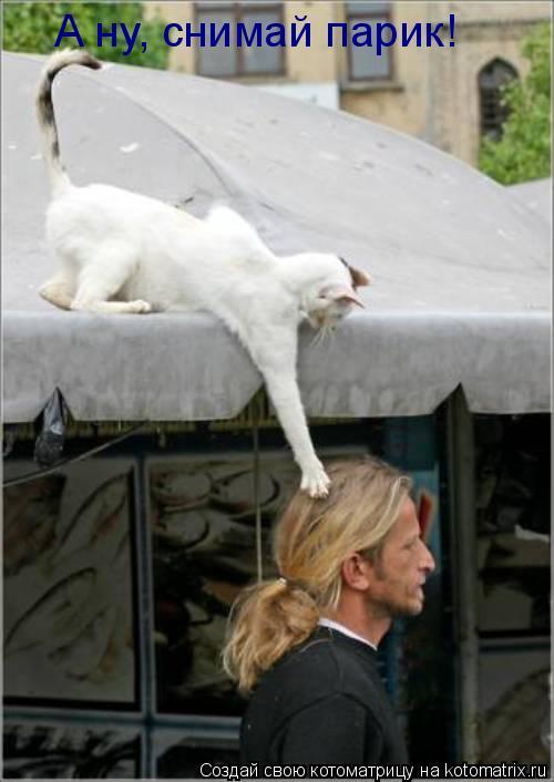 Котоматрица: А ну, снимай парик!