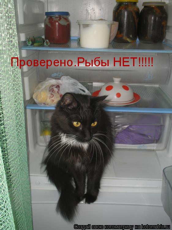 Котоматрица: Проверено.Рыбы НЕТ!!!!!