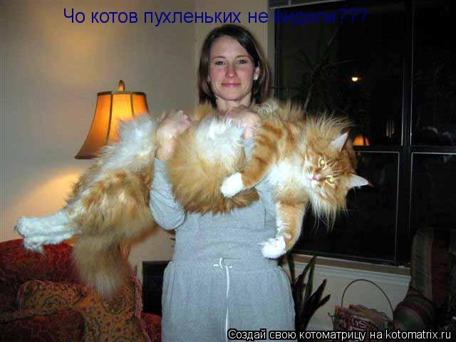 Котоматрица: Чо котов пухленьких не видели???