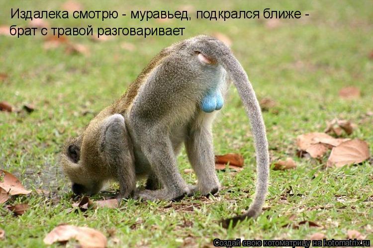Котоматрица: Издалека смотрю - муравьед, подкрался ближе - брат с травой разговаривает