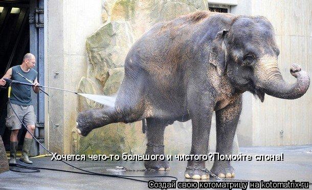 Котоматрица: Хочется чего-то большого и чистого?Помойте слона!