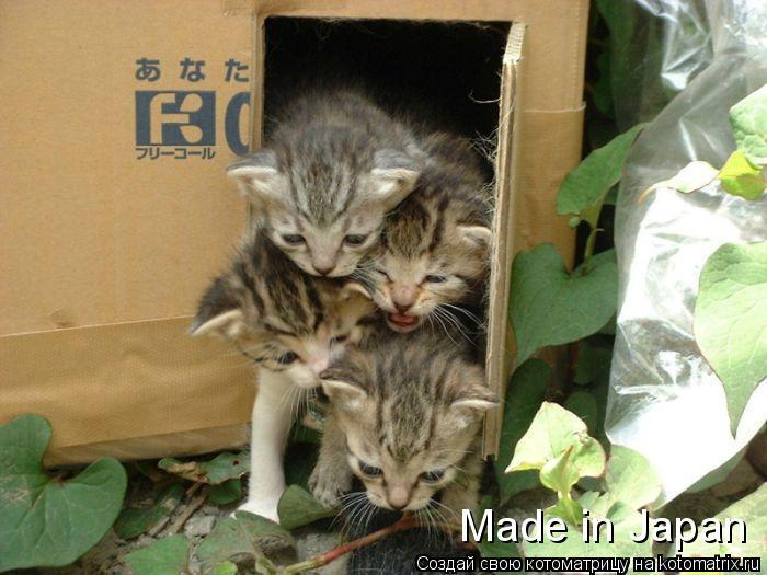 Котоматрица: Made in Japan