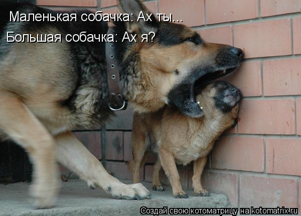 Котоматрица: Маленькая собачка: Ах ты... Большая собачка: Ах я?