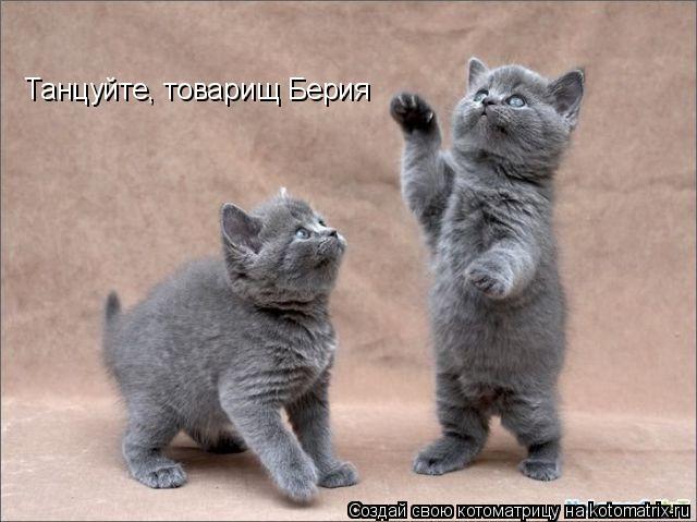Котоматрица: Танцуйте, товарищ Берия