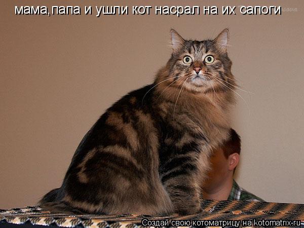 Котоматрица: мама,папа и ушли кот насрал на их сапоги