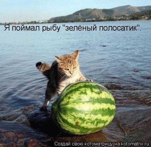 "Котоматрица: Я поймал рыбу ""зелёный полосатик""."
