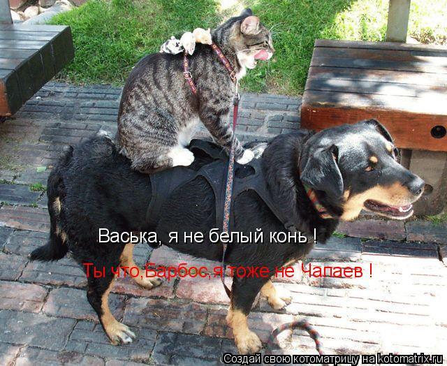 Котоматрица: Васька, я не белый конь ! Ты что,Барбос,я тоже не Чапаев !