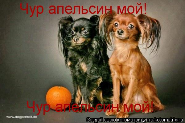 Котоматрица: Чур апельсин мой! Чур апельсин мой!