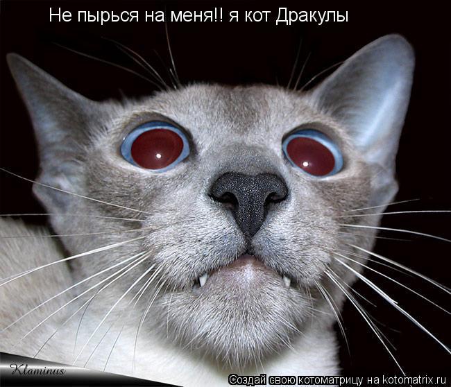 Котоматрица: Не пырься на меня!! я кот Дракулы