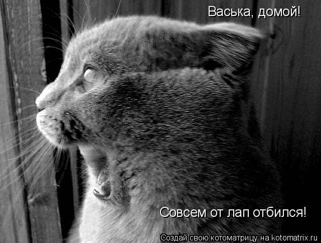 Котоматрица: Васька, домой! Совсем от лап отбился!