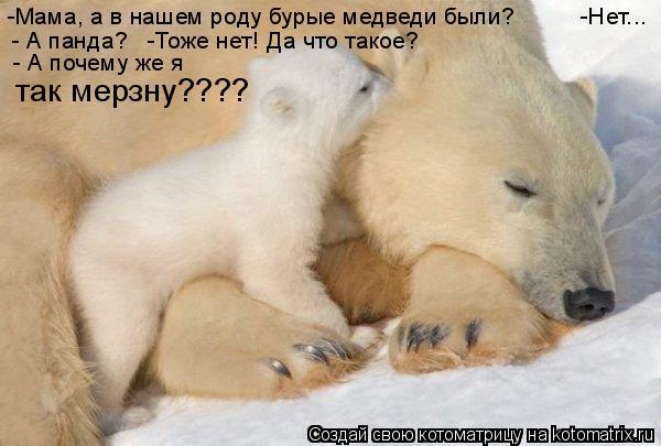 Котоматрица: -Мама, а в нашем роду бурые медведи были?          -Нет... - А панда?   -Тоже нет! Да что такое? - А почему же я   так мерзну????