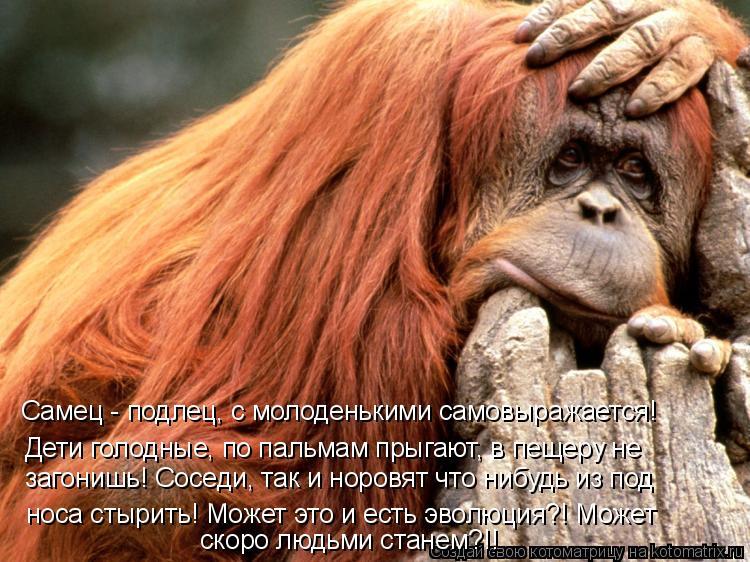 Котоматрица: Самец - подлец, с молоденькими самовыражается! Дети голодные, по пальмам прыгают, в пещеру не  носа стырить! Может это и есть эволюция?! Может