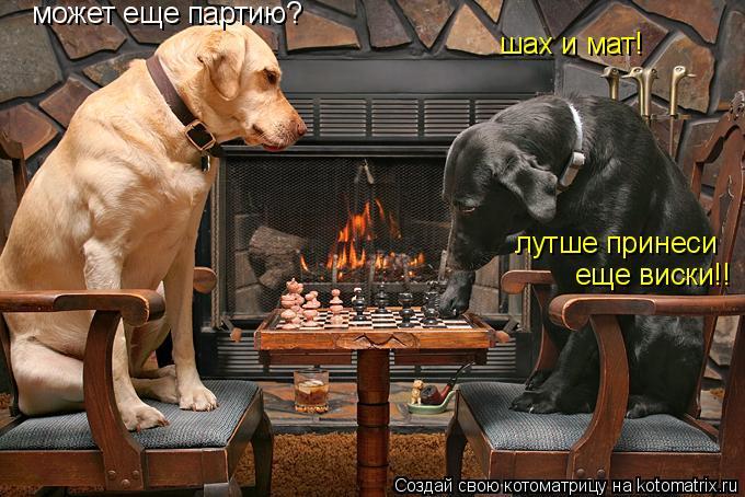 Котоматрица: может еще партию? шах и мат! лутше принеси еще виски!!