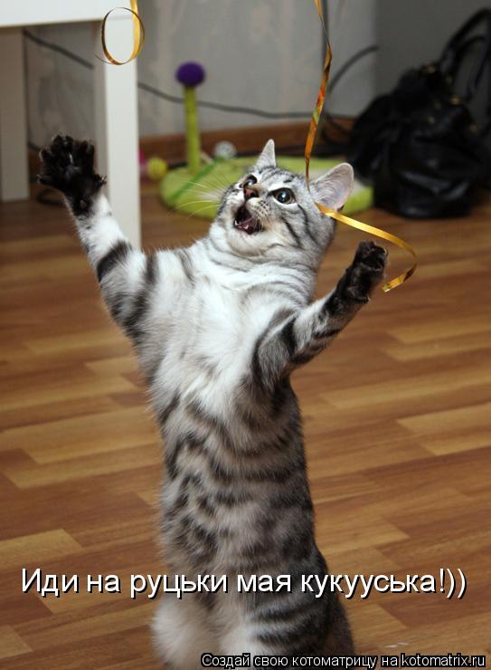 Котоматрица: Иди на руцьки мая кукууська!))
