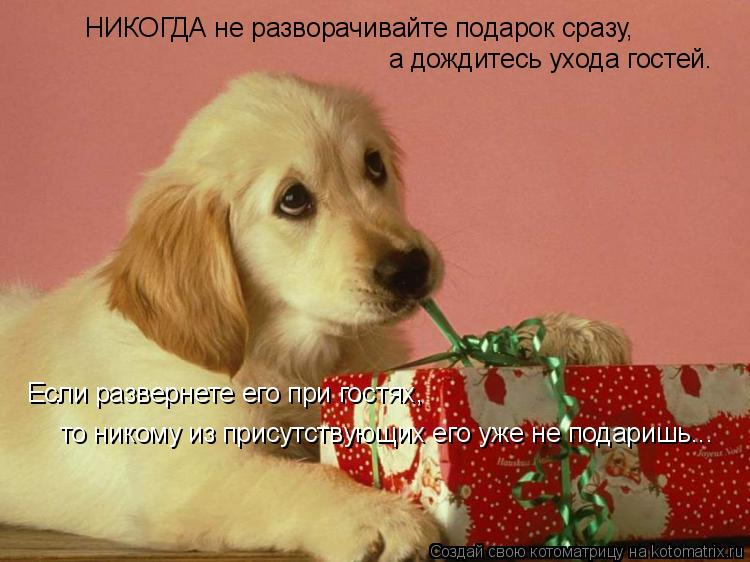 Котоматрица: НИКОГДА не разворачивайте подарок сразу, а дождитесь ухода гостей. Если развернете его при гостях, то никому из присутствующих его уже не п