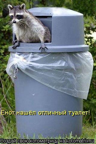 Котоматрица: Енот нашёл отличный туалет!