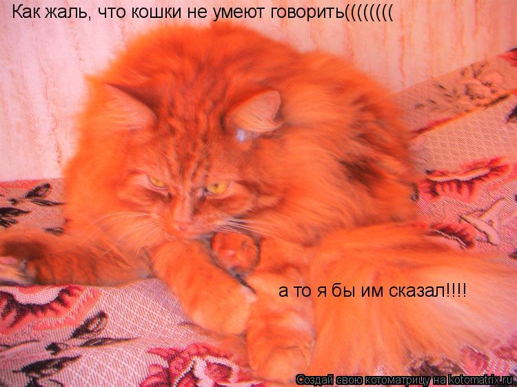 Котоматрица: Как жаль, что кошки не умеют говорить(((((((( а то я бы им сказал!!!!