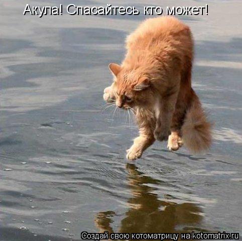 Котоматрица: Акула! Спасайтесь кто может!