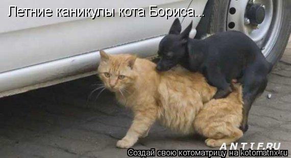 Котоматрица: Летние каникулы кота Бориса...