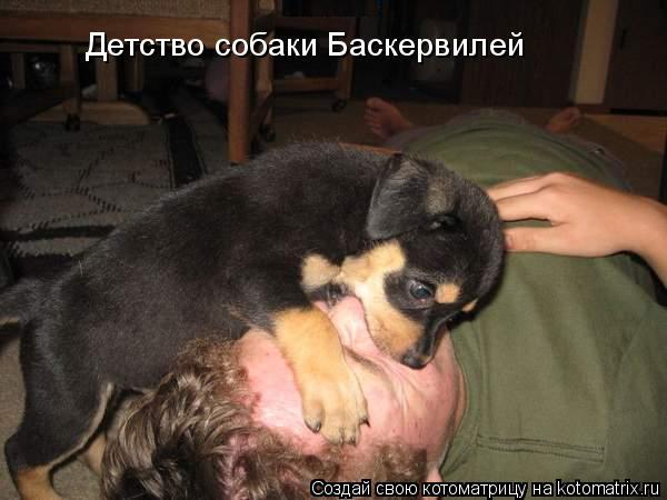 Котоматрица: Детство собаки Баскервилей