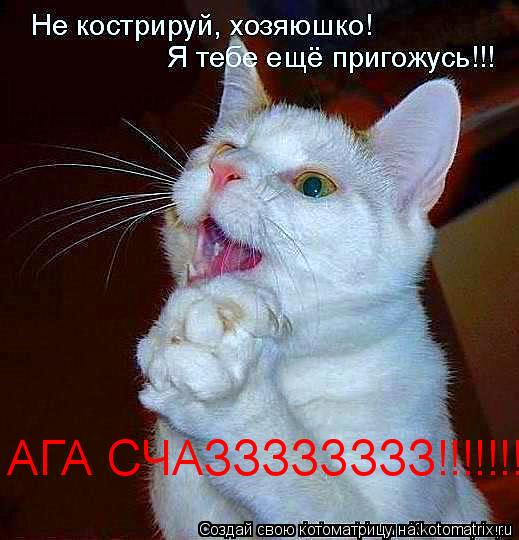 Котоматрица: АГА СЧАЗЗЗЗЗЗЗЗ!!!!!!!