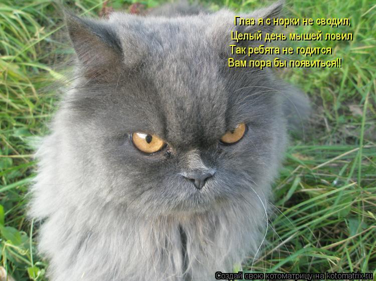 Котоматрица: Глаз я с норки не сводил, Целый день мышей ловил Так ребята не годится Вам пора бы появиться!!