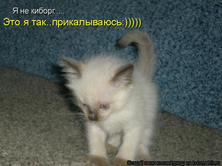 Котоматрица: Я не киборг..... Это я так..прикалываюсь:)))))