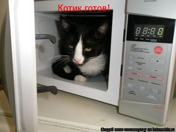 Котоматрица: Котик готов!