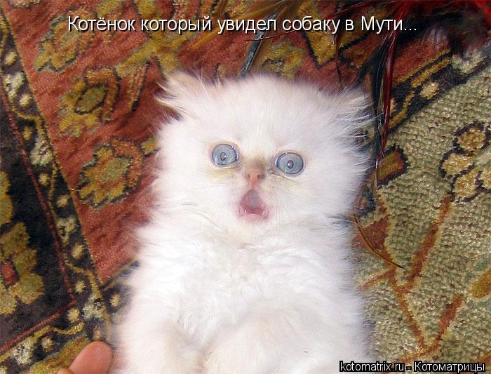 Котоматрица: Котёнок который увидел собаку в Мути...