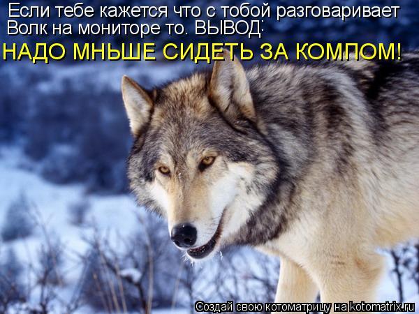 Котоматрица: Если тебе кажется что с тобой разговаривает Волк на мониторе то. ВЫВОД НАДО МНЬШЕ СИДЕТЬ ЗА КОМПОМ! :