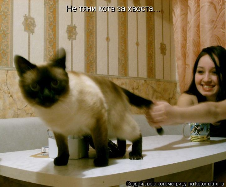Котоматрица: Не тяни кота за хвоста...