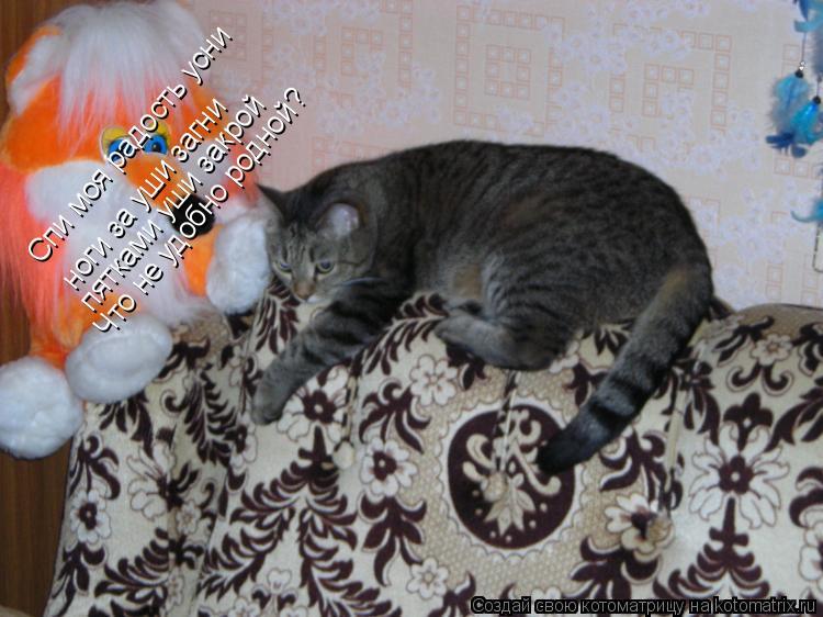Котоматрица: Спи моя радость усни  ноги за уши загни пятками уши закрой Что не удобно родной?